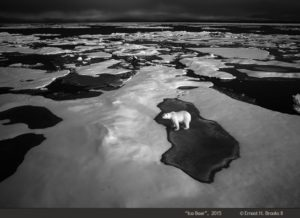 Ernie Brooks' photograph of a polar bear highlights the effects of climate change.
